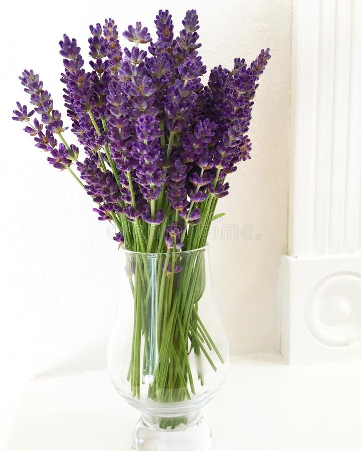 Lavender bouquet on a mantle. Freshly picked lavender bouquet on a white mantle royalty free stock photos