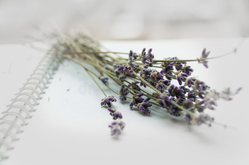 Lavender bouquet on an open notebook, selective focus, romantic card, layout for design and decoration of romance and love themes royalty free stock photography