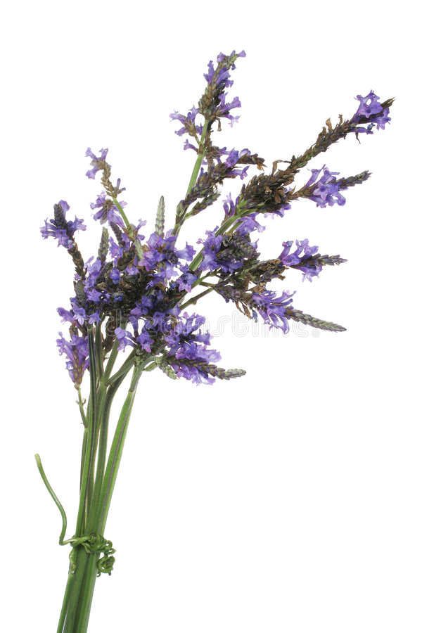 Download Lavender Bundle stock photo. Image of herb, medicine, tied - 458892