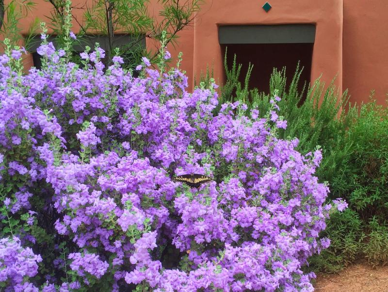 Lavender Bush and Butterfly Outside Enchantment Casita stock photo