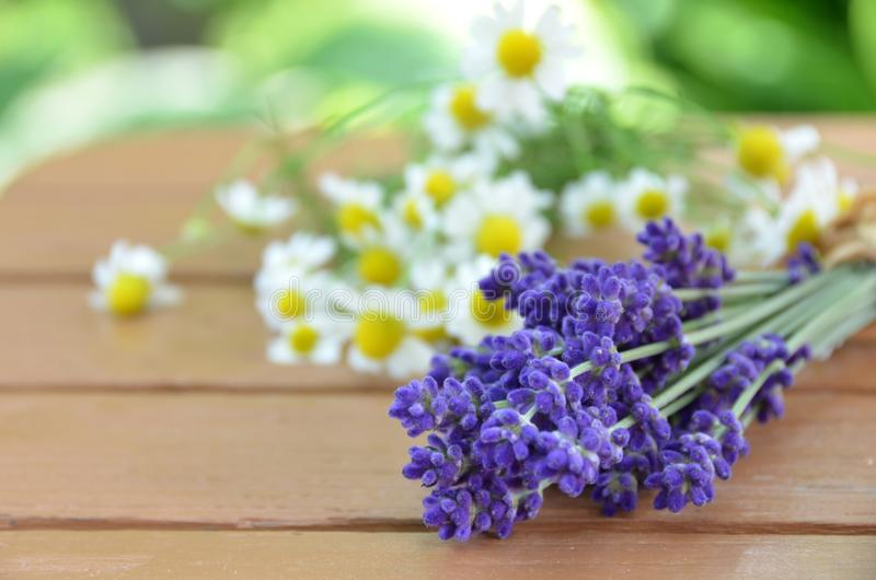 Lavender and chamomile royalty free stock photo