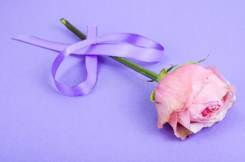 Lavender color ribbon, symbolizing awareness for all cancers, february 4th, world cancer day. Studio Photo stock photography