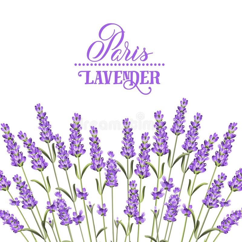 The lavender elegant card. Wreath of lavender flowers in watercolor paint style. The lavender elegant card with frame of flowers and text. Lavender garland for stock illustration