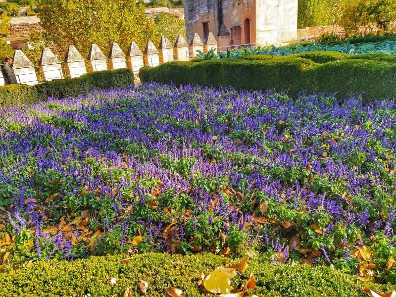 Lavender em Granada fotos de stock royalty free
