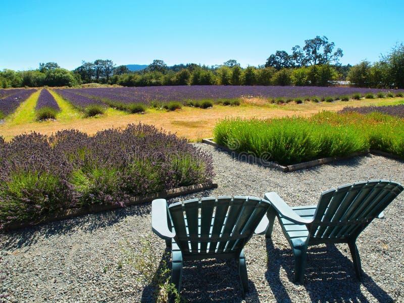 Lavender Farm Stock Photo