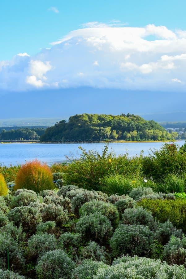 Lavender farm in Oishi Park, Lake Kawaguchiko. Yamanashi, Japan on an overcast day stock photography