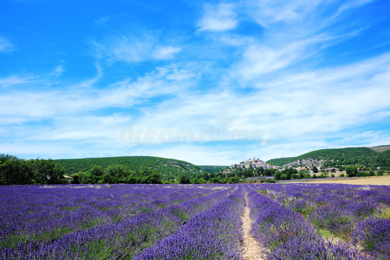 Download Lavender Field At Banon, France Stock Image - Image of ancient, farming: 21190037