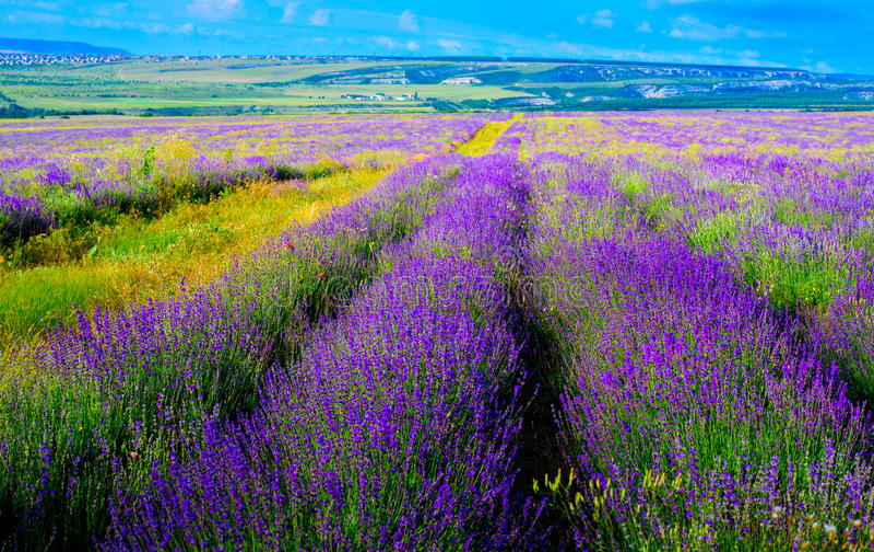 Lavender field near the city of Bakhchisarai. Crimea stock image