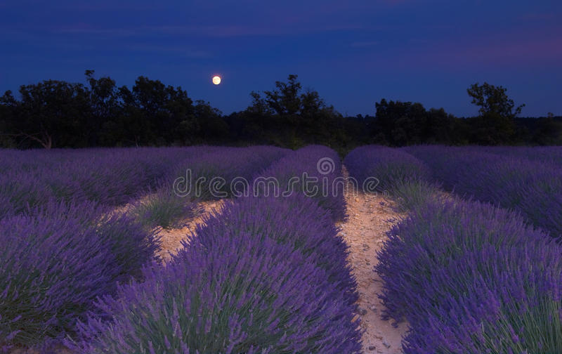 Download Lavender Field In Provence Under The Moonlight Stock Photos - Image: 18870923