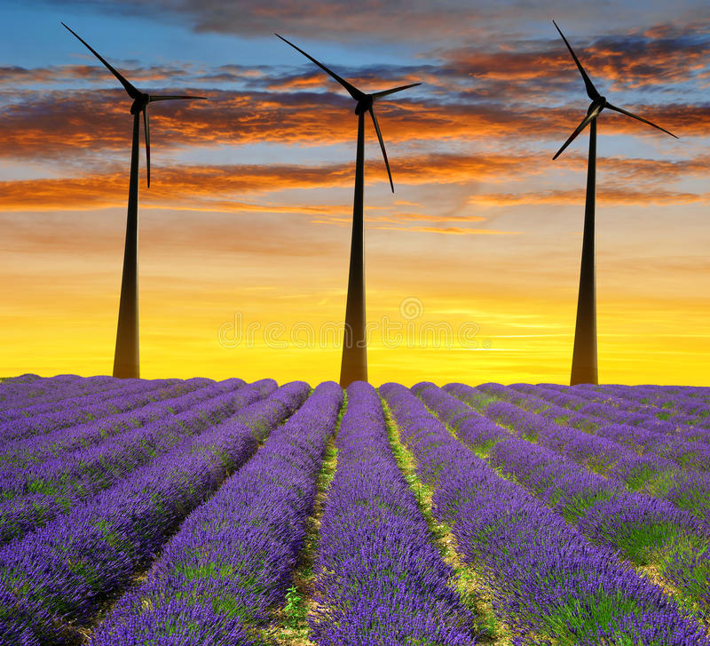 Lavender field with wind turbines stock images