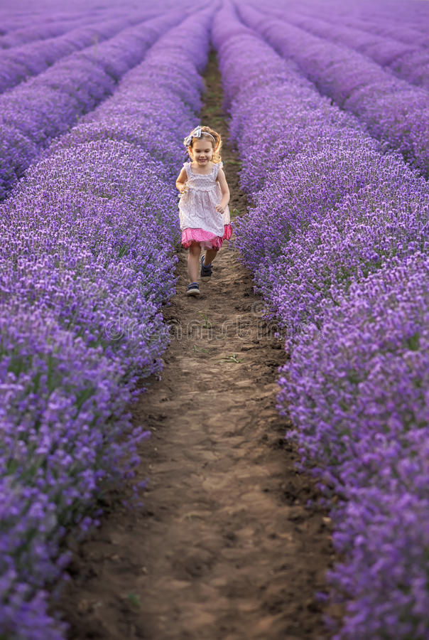 Among the lavender fields royalty free stock photography