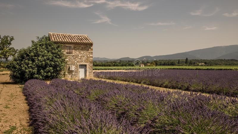 Provencal cottage in the middle of lavender fields. Lavender fields brighten up Provence during the summer. Traditional sheds are used to store the tools of the royalty free stock photos