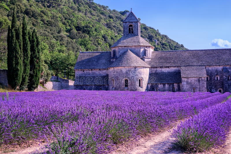 Lavender fields, France. Lavender fields at Senanque monastery, Provence, France royalty free stock photos