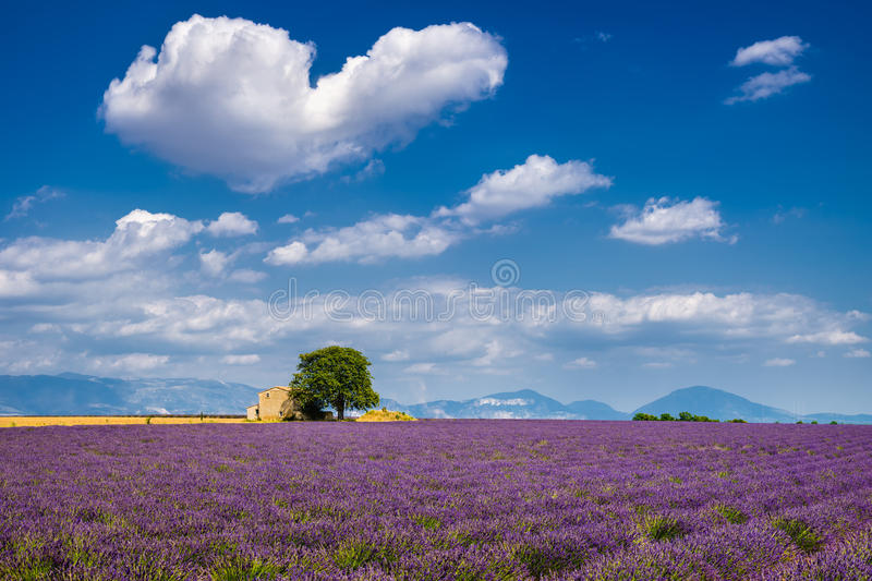 Lavender fields in the heart of Valensole, Southern France. Summer in Valensole with lavender fields, stone house and heart-shaped cloud. Summer in Alpes de stock photo