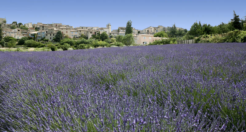 Lavender fields hilltown rural provence france royalty free stock photos