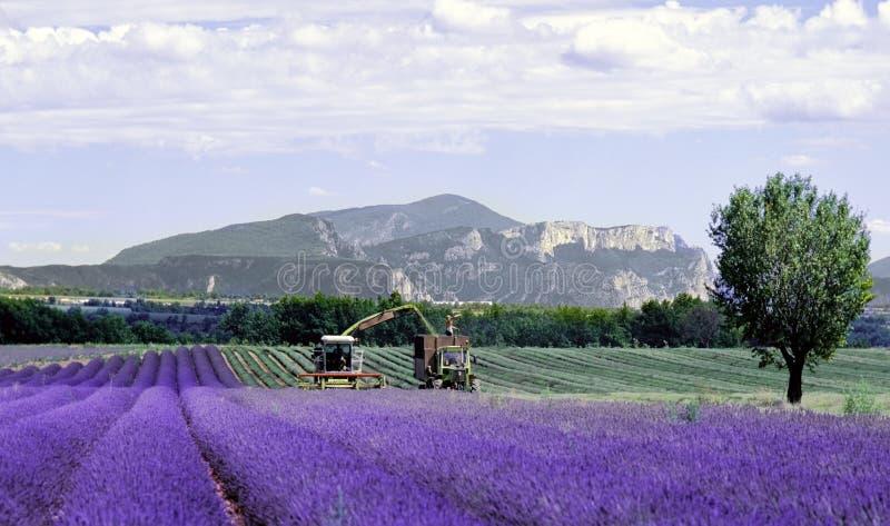 Lavender Fields Provence Franc Royalty Free Stock Photos