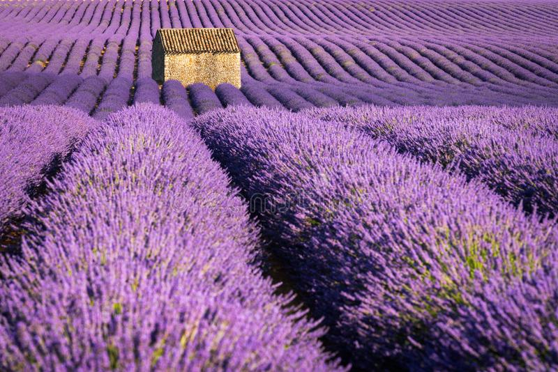 Lavender fields in Valensole at sunset with stone house in Summer. Alpes-de-Haute-Provence, France. Lavender fields in Valensole at sunset with stone house in stock photography