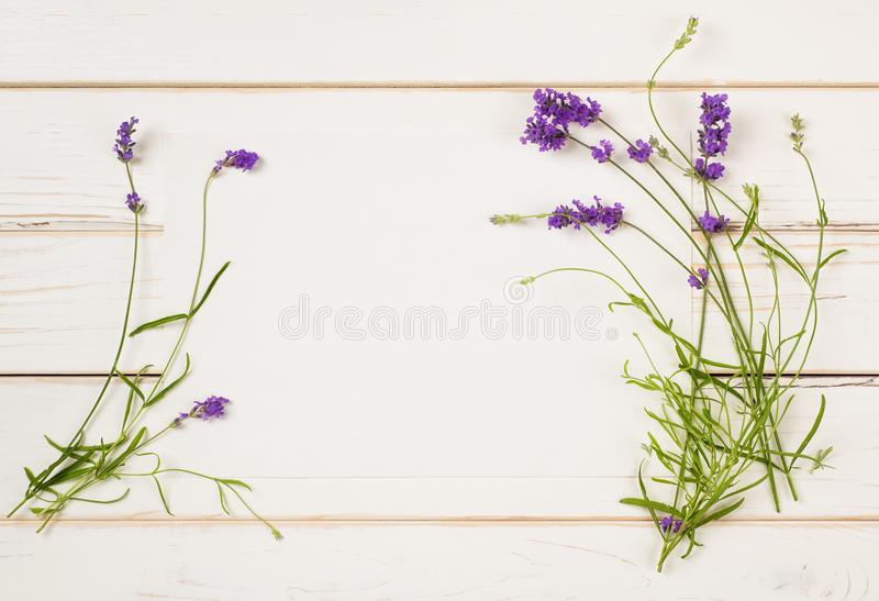 Lavender Flower Blossoms on Stems with leaves as Borders of White Paper Card on Distressed White Shiplap Board Background with roo. M or space for copy, text or royalty free stock image