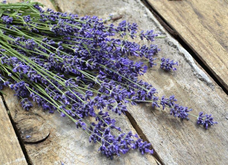Lavender, Flower, English Lavender, Purple Free Public Domain Cc0 Image