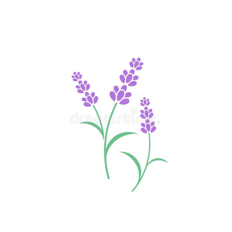 Lavender flower vector illustration