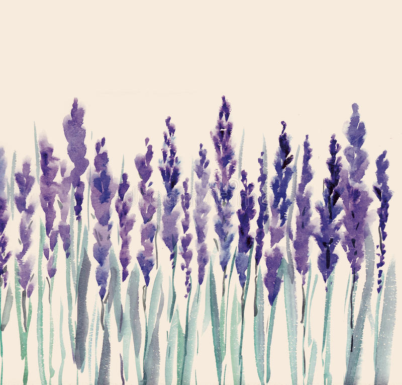 Download Lavender flowers stock illustration. Image of french - 23622191