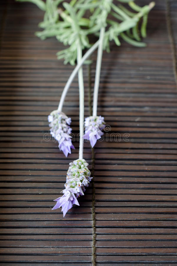 Download Lavender Flowers stock photo. Image of homeopathy, homeopathic - 26627940