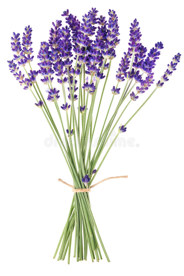 Free Lavender Flowers Stock Photo - 32007880