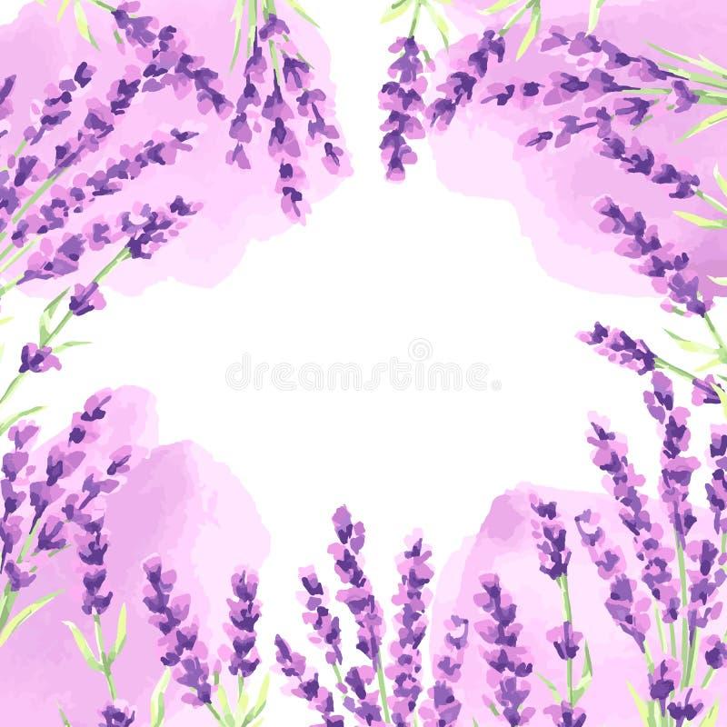 Lavender flowers background design. royalty free illustration