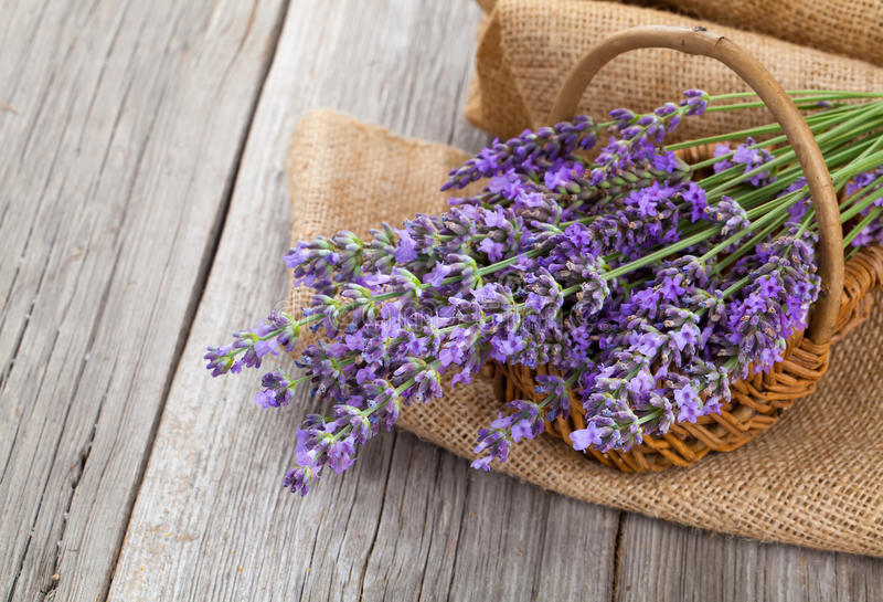 Lavender flowers in a basket with burlap stock photos