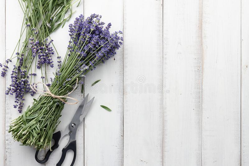 Lavender flowers bouquet on white wooden planks. Composing and binding beautiful lavender flowers bouquet on white wooden planks background, top view royalty free stock photo