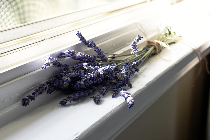Lavender Flowers. A close up image of purple lavender flowers on a white window ledge royalty free stock image
