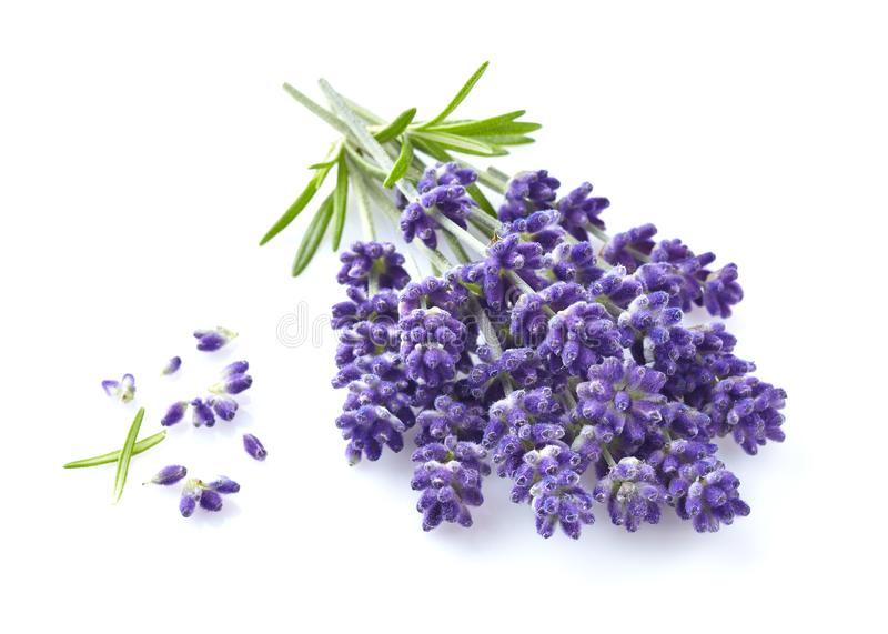 Lavender flowers in closeup stock photo