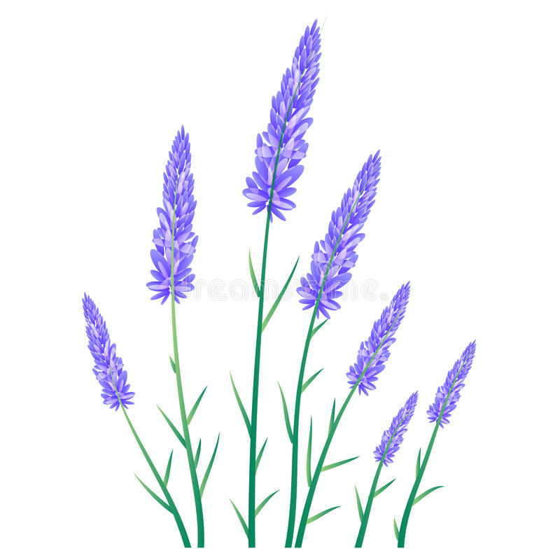 Download Lavender Flowers Landscapes Stock Vector - Image: 40109896