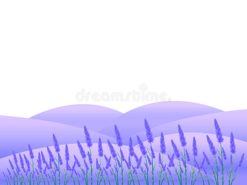 Lavender Flowers Landscapes Stock Vector