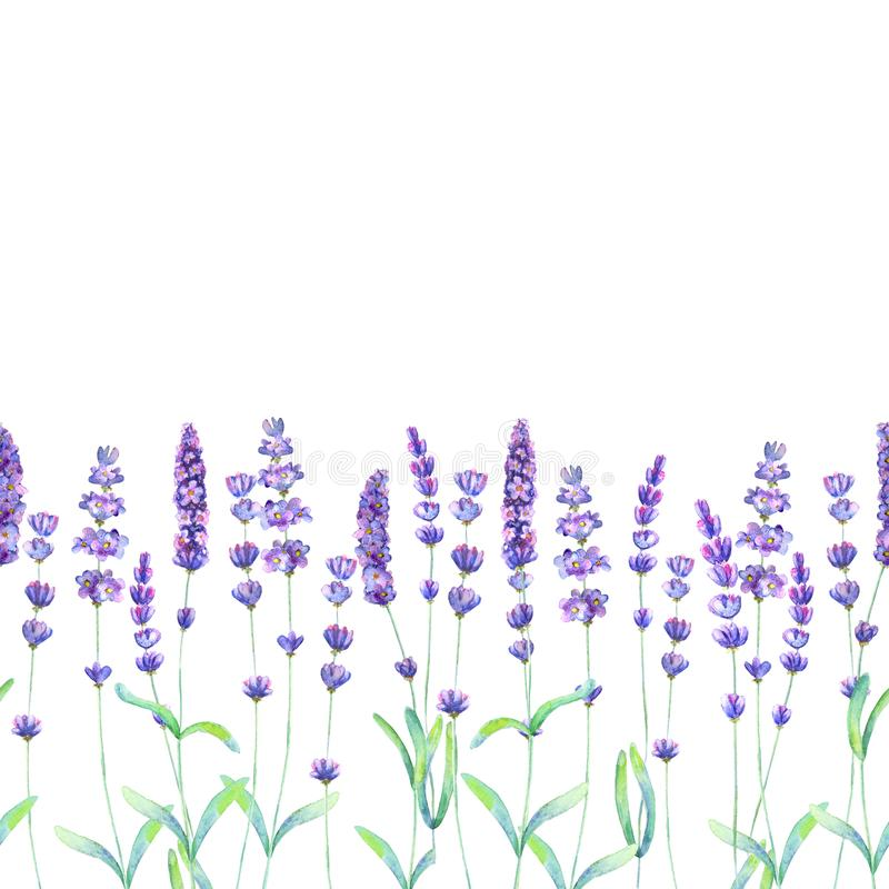 Lavender flowers, leaves and branches watercolor seamless pattern on white background vector illustration