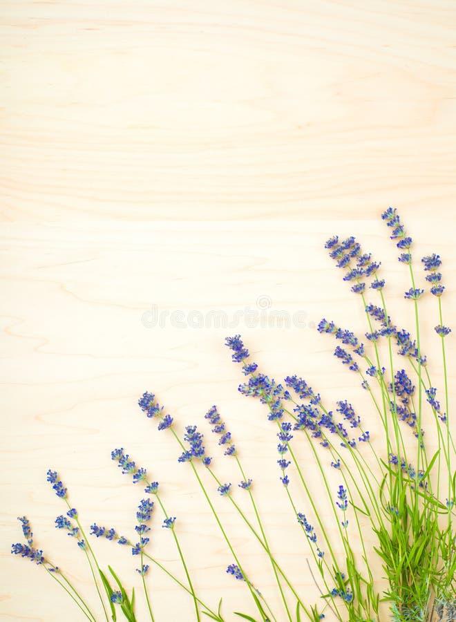 Lavender Flowers on Light tone Wood Background royalty free stock image