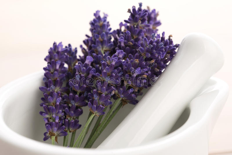 Lavender flowers in a mortar stock image