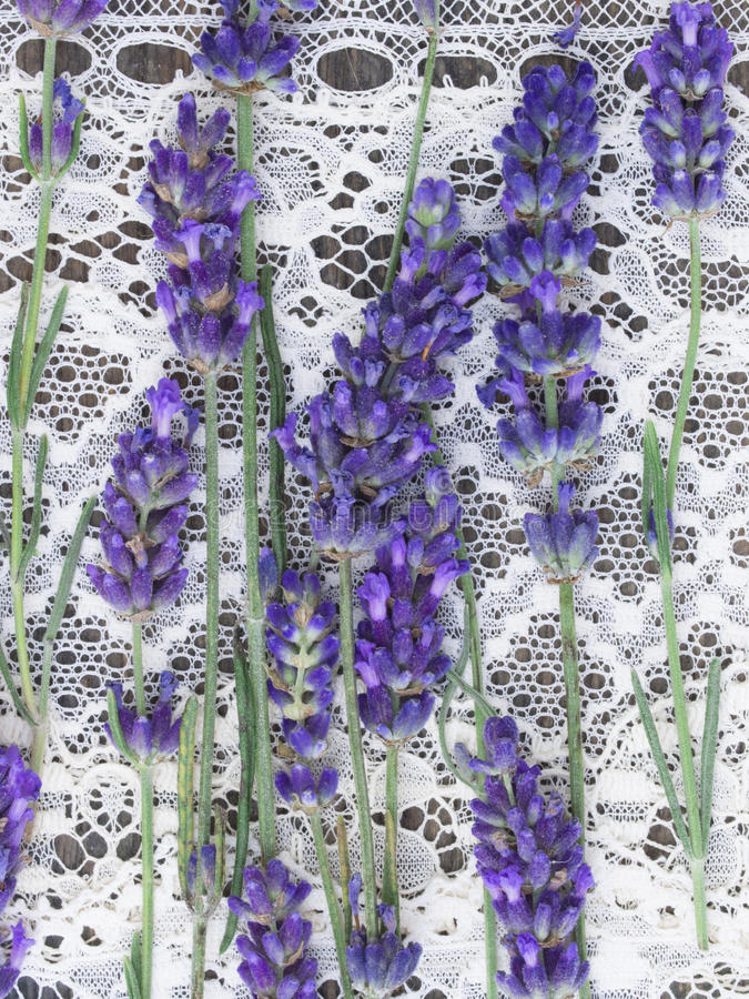 Lavender flowers. On the old lace, retro arrangement royalty free stock photos