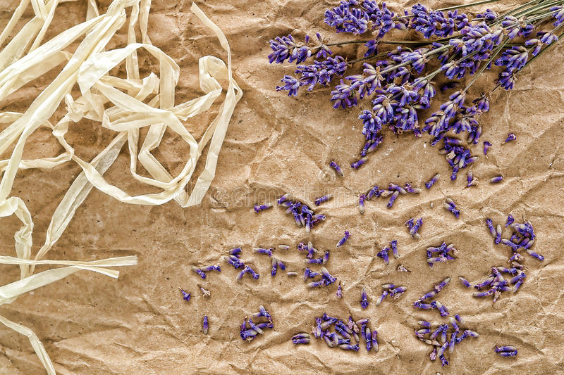 Download Lavender Flowers And Seeds Background Stock Image - Image of paper, backdrop: 19851441