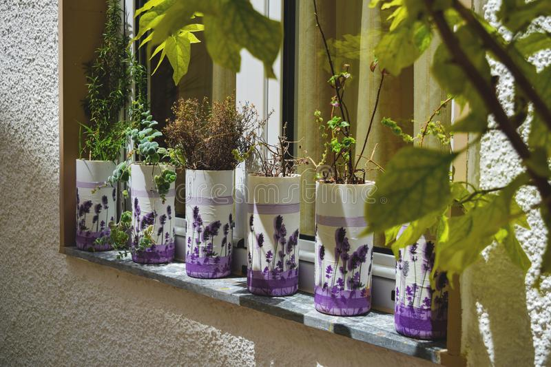 Lavender flowers and succulents in pots on the windowsill. In Greece royalty free stock image
