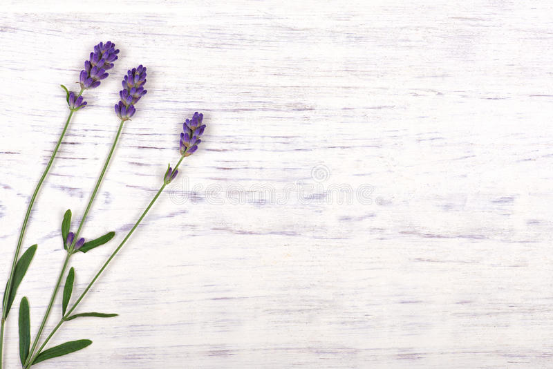 Lavender flowers on white wood table background stock photography