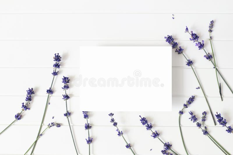 Lavender flowers on white wooden table background. Decorative floral frame, web banner with Lavandula officinalis. Blank stock photo