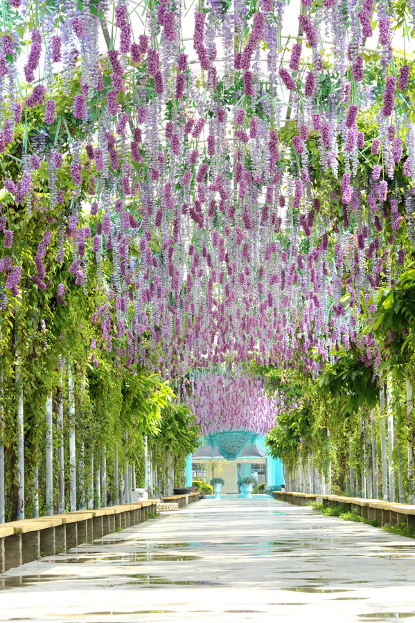 Free Lavender Garden Stock Images - 9905074