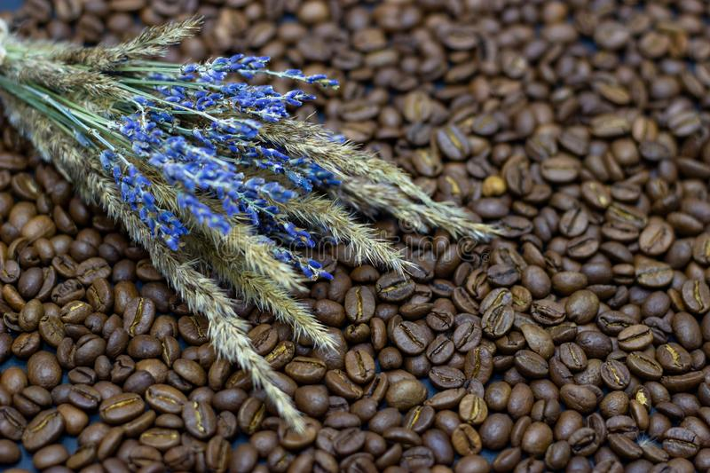 Lavender grains and coffee beans place for text background. Lavender grains and coffee beans place for text royalty free stock photo