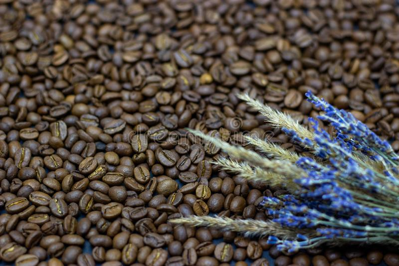 Lavender grains and coffee beans place for text background. Lavender grains and coffee beans place for text royalty free stock image