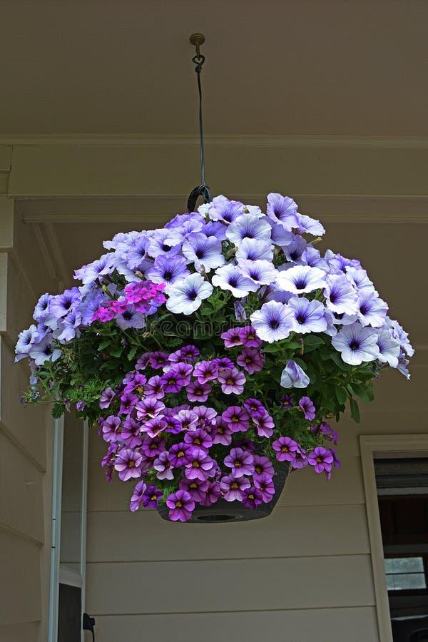Lavender Hanging Basket royalty free stock photos
