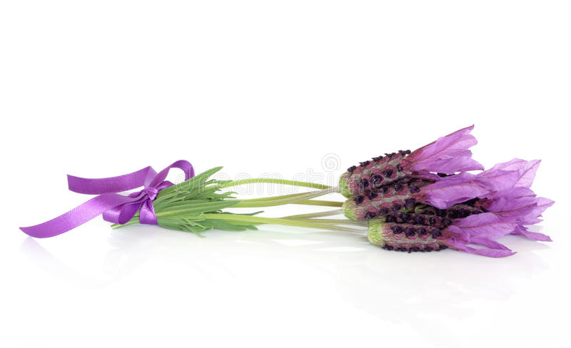 Download Lavender Herb Flower Posy stock photo. Image of lavandula - 19540286