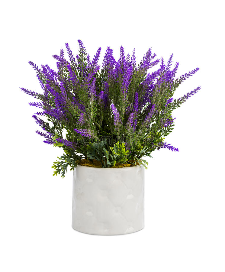 Free Lavender In Vase Stock Images - 80288814