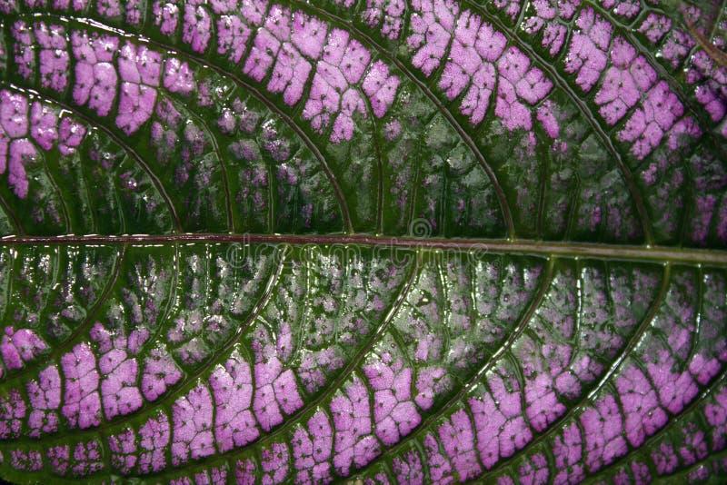 Lavender Leaf Design stock photo