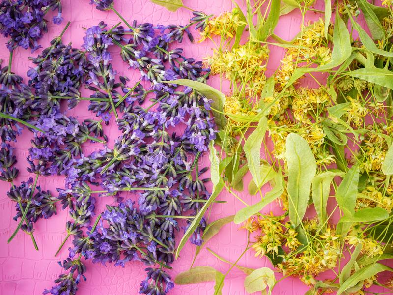 Lavender and Linden flowers laid out for drying royalty free stock photography